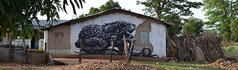 roa | frog | gambia | africa (3 votes)