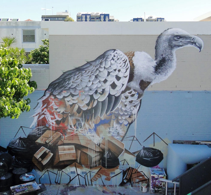 fintan-magee | bird | australia