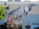 fintan-magee | bird | australia (18 votes)