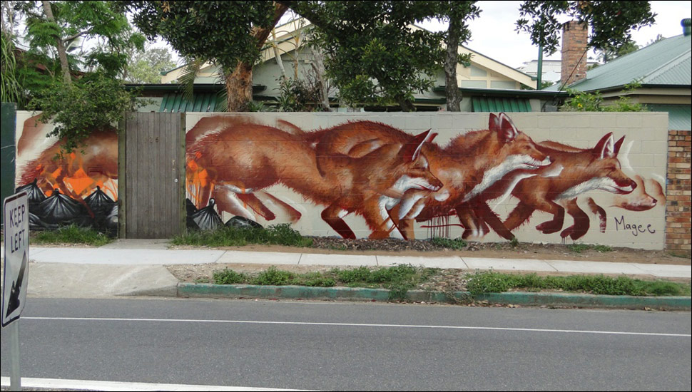 fintan-magee | fox | australia