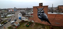 roa | resto | owl | hasselt | belgium (20 votes)