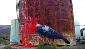roa | pigeon | california (39 votes)