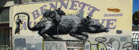 roa | sanfrancisco | rat | california (17 votes)