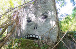 dav | contextual-face | tree | france