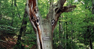 dav | contextual-face | tree | france (19 votes)