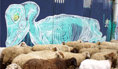 awer | blue | sheep | italy (19 votes)