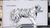 escif | tiger | italy (16 votes)
