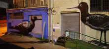 roa | bird | night | ancona | italy (17 votes)