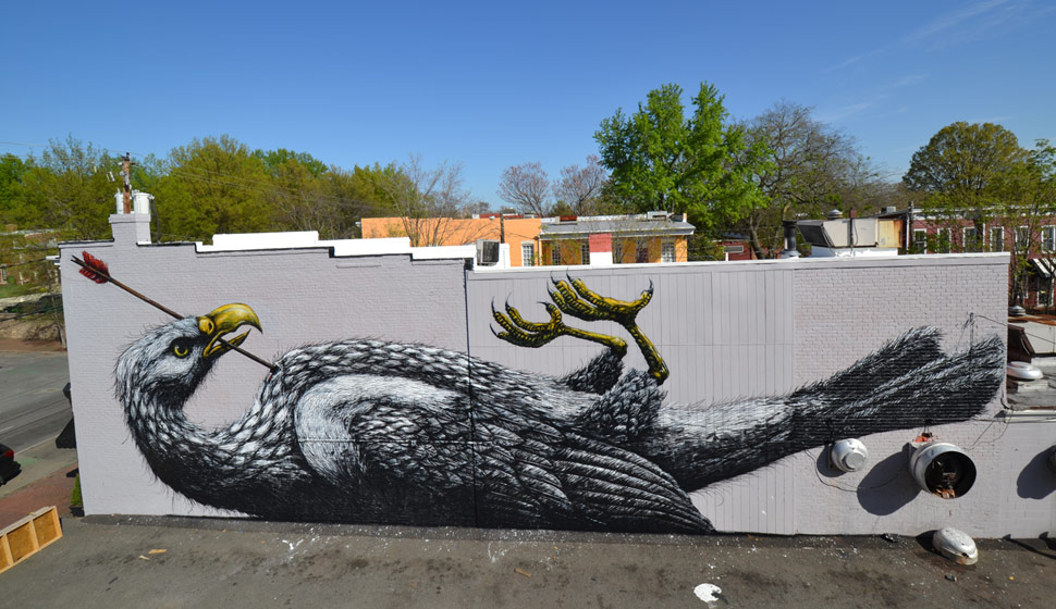 roa | bird | big | richmond | virginia | usa | north-america