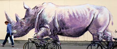 harry-james | purple | rhinoceros | paris (33 votes)