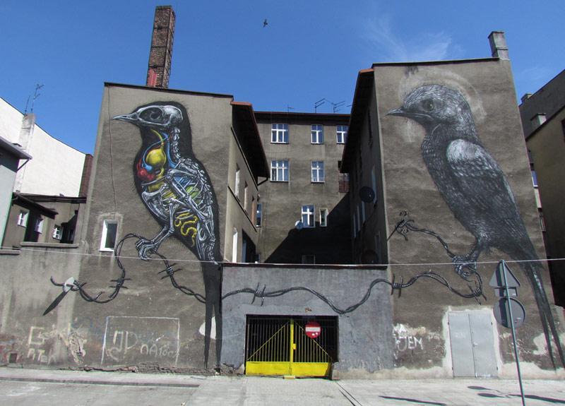 roa | bird | katowice | poland