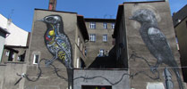 roa | bird | katowice | poland (12 votes)