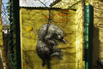 roa | london | ukingdom (17 votes)