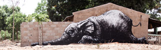 roa | gambia | elephant | various (28 votes)