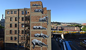 roa | johannesburg | south-africa | africa (13 votes)