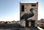 roa | bird | johannesburg | south-africa | africa (11 votes)