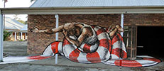 fintan-magee | snake | brisbane | australia (7 votes)