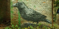roa | bird | gent | belgium (13 votes)