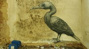 roa | bird | gent | belgium (15 votes)