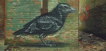 roa | bird | gent | belgium (18 votes)