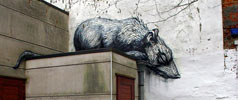 roa | rat | belgium (30 votes)