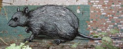 roa | doel | rat | belgium (11 votes)