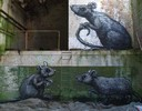 roa | gent | rat | belgium (20 votes)