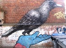 roa | resto | bue | bird | hand | belgium (15 votes)