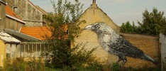 roa | bird | doel | belgium (17 votes)