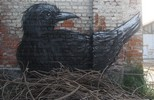 roa | gent | bird | belgium (12 votes)