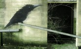 roa | bird | belgium (7 votes)