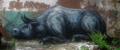 roa | belgium (6 votes)