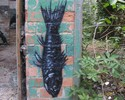 roa | fish | belgium (8 votes)