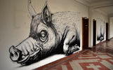 roa | pig | bruxelles | belgium (21 votes)