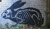 roa | rabbit | belgium (28 votes)