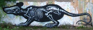 roa | rat | belgium (25 votes)