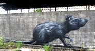 roa | rat | belgium (14 votes)