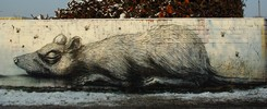 roa | rat | snow | koln | germany (27 votes)
