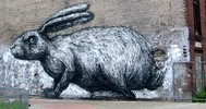 roa | rabbit | berlin | germany (17 votes)