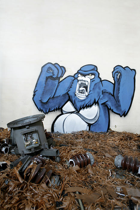 koes | animalkorps | blue | monkey | italy
