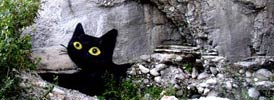 sqon | black | cat | italy (135 votes)