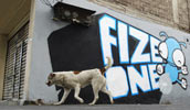 fize | stnk | dog | mexico (22 votes)