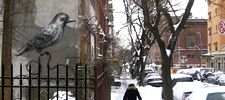 roa | bird | snow | nyc (29 votes)