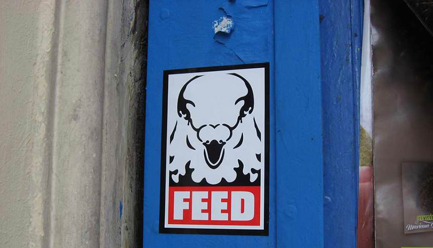 feed | pigeon | paris