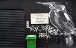 philippe-baudelocque | chalk | bird | paris (47 votes)