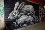 roa | shutters | rabbit | paris (23 votes)