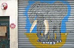 mosko | shutters | elephant | paris (8 votes)