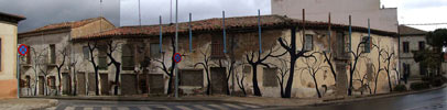pablo-s-herrero | tree | salamanca | spain (63 votes)