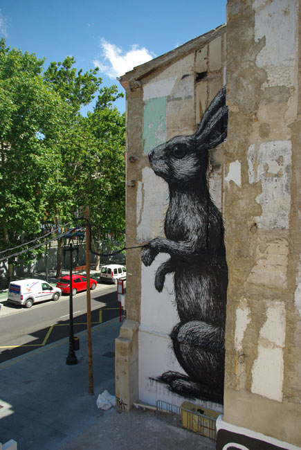 roa | rabbit | zaragoza | spain