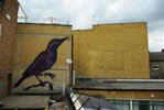 roa | rooftop | bird | london | ukingdom (18 votes)